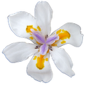 Orchid flower battery widget icon