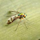 Long-legged fly.
