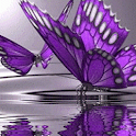 Very Beatiful Butterfly Live W logo