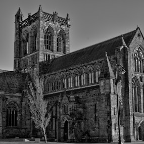 by Andrew Percival - Buildings & Architecture Places of Worship ( detail, building, old, gothic, church, black and white, stone, architecture, cityscape, city, tree, sunny, arches, cathedral, abbey )