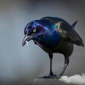 BIRDS TORONTO by Abdulmagid alfrgany Photograph - Animals Birds