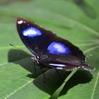 Blue Moon Butterfly
