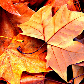 Leaves by Gil Reis - Nature Up Close Leaves & Grasses ( fall leaves on ground, explore, macro, nature, places, leaves )