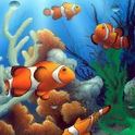 Magic Touch Clownfish 2 LWP icon