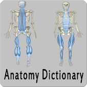 Anatomy Dictionary
