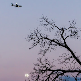 Over the Moon by Emily Stillings - Nature Up Close Trees & Bushes ( moon, e.j.stillings photography, purple, silhouette, barren, winter, sky, plane, tree, fly, blue, sunset, emily stillings,  )