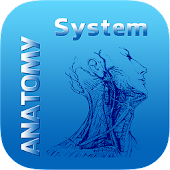 Human Anatomy System