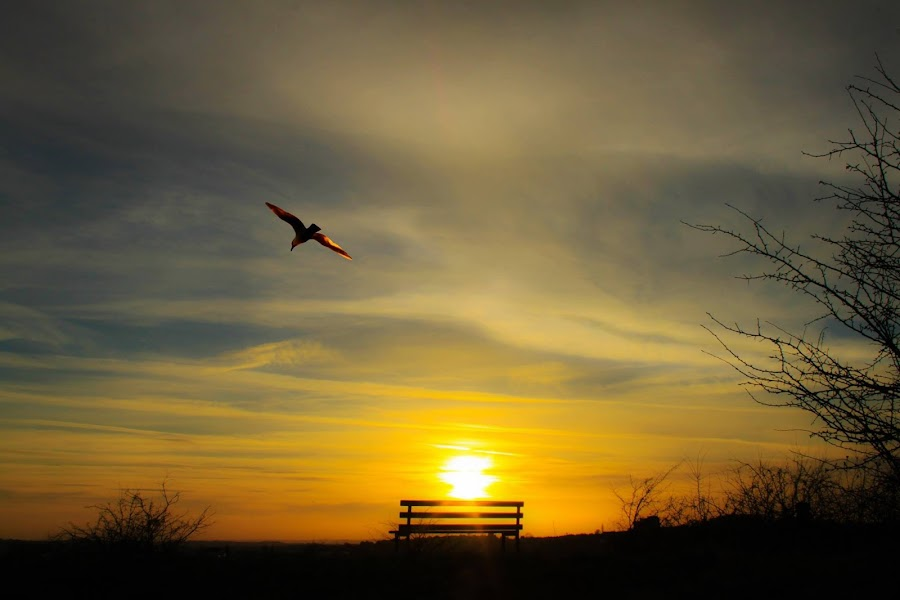 freedom by Catherine Cross - Landscapes Sunsets & Sunrises ( bird, flying, sky, bench, sunset, landscape )