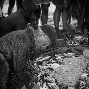 Fisherman's Bounty by Jack Noble - People Street & Candids ( 2014, black and white, fish, street, pixoto, candid, photography, jack nobre, bounty, fonte da telha, summer, portugal, fisherman )