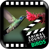 Best Birds Sounds