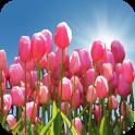 Tulip Field Live Wallpaper icon