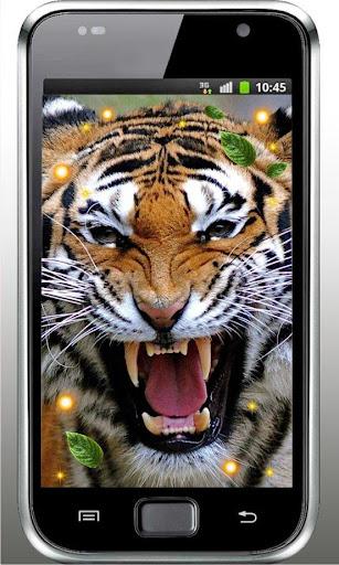 Tiger African live wallpaper