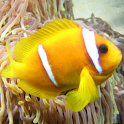 Fish of the Coral Reef icon