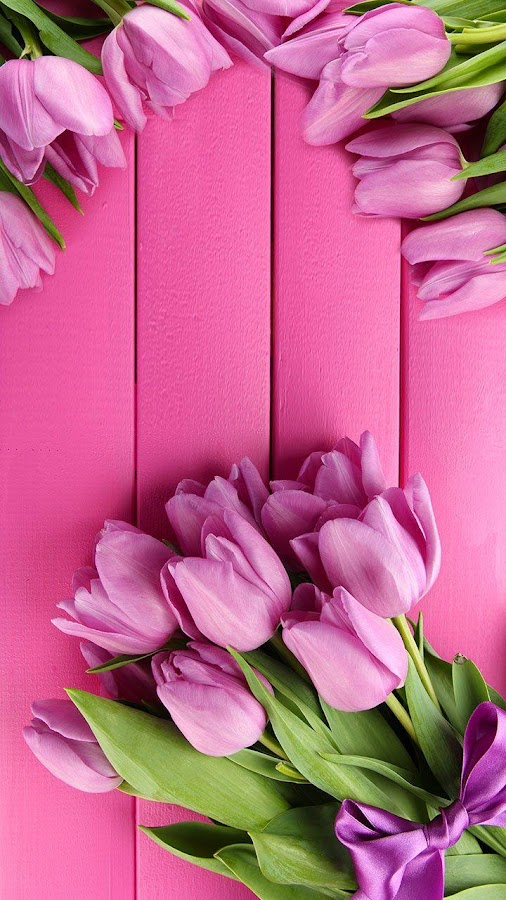 Pink Tulips Live Wallpaper - Android Apps on Google Play