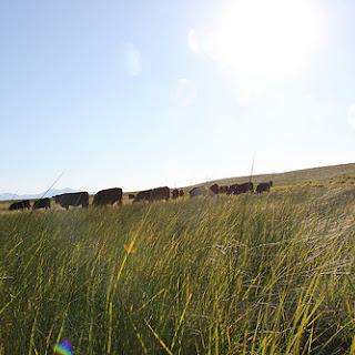 Grass-fed Beef Tartare.