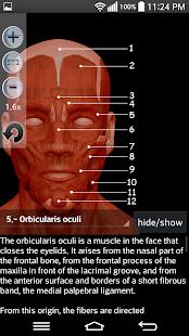 Anatomy Muscles: miniatura da captura de tela