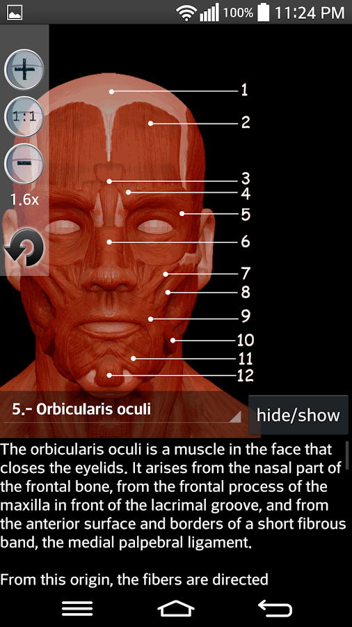 Anatomy Muscles- screenshot