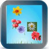 Flower Kidz