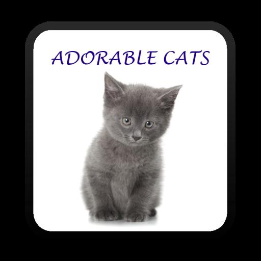 Adorable Cats Live Wallpaper LOGO-APP點子