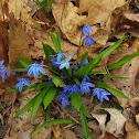 Unknown blue flowers