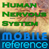 Human Nervous System Study Gui