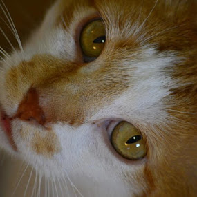 by Sandy Miller - Animals - Cats Portraits ( , #GARYFONGPETS, #SHOWUSYOURPETS )