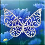 Diamond Butterflies Live