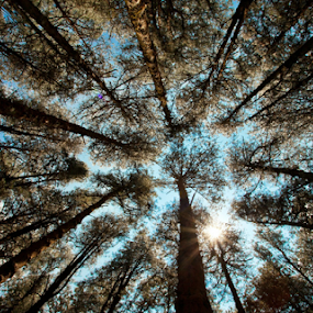 Ants view by Sandeep  Kumar - Nature Up Close Trees & Bushes ( sky, 08884922253, tree, view from below, ground,  )