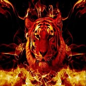 Fire Tiger Live Wallpaper