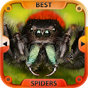 Best Spiders icon