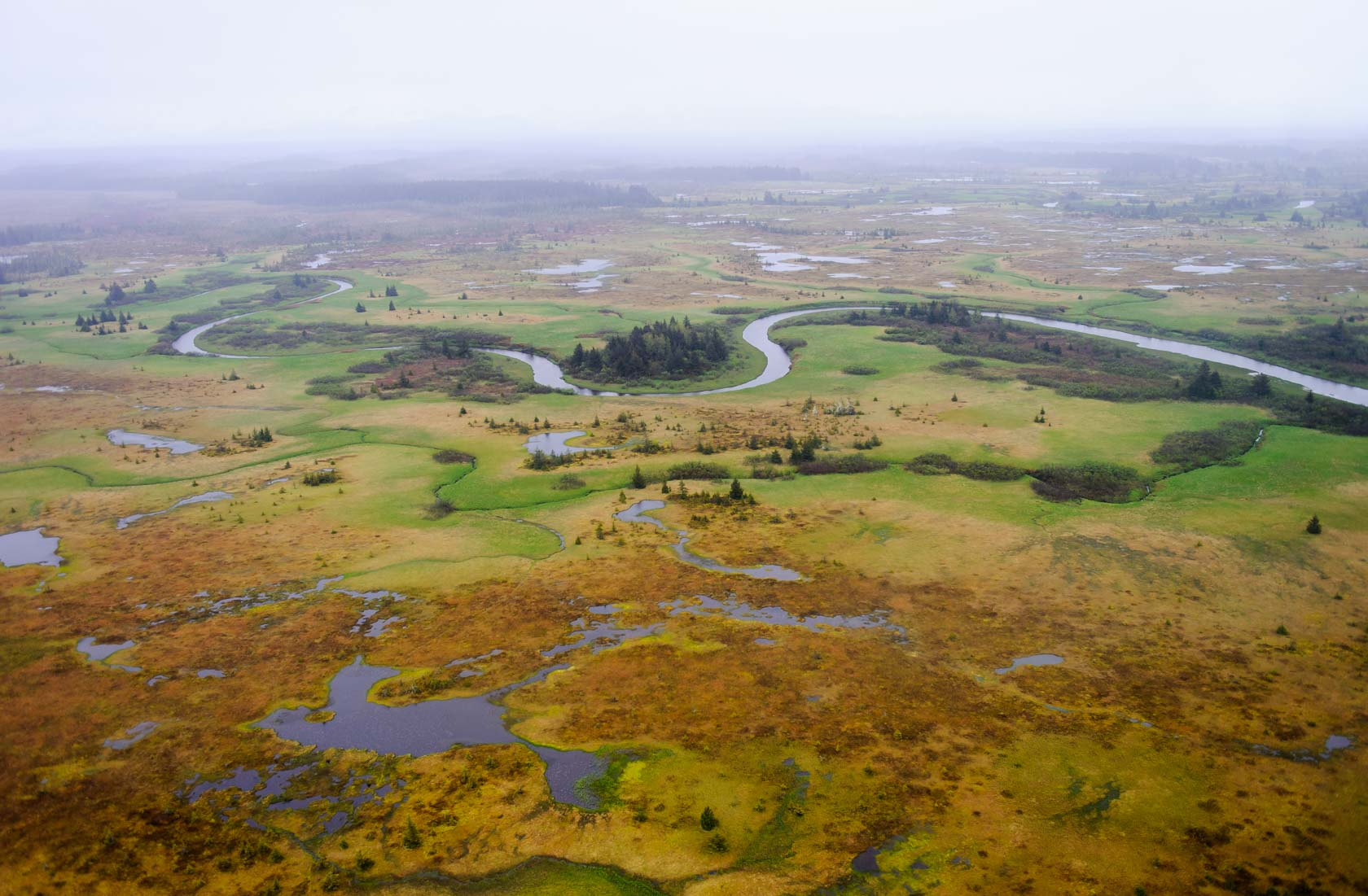 Coastal Wetlands, Tongass National Forest
