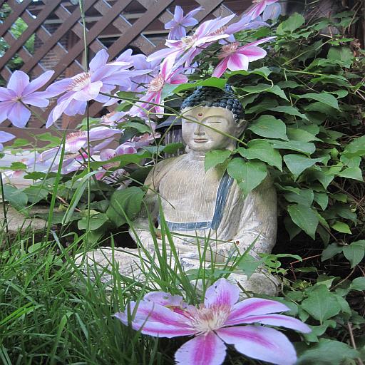 Buddhas Weisheiten 健康 App LOGO-硬是要APP