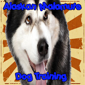 Alaskan Malamute Dog Training