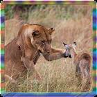 wildlife wallpaper icon