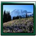 Nature Romantic Live Wallpaper logo
