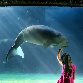 Play With Dugong by Widianto Didiet - City,  Street & Park  Amusement Parks