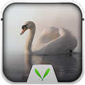 Swan Free Live Locker Theme icon