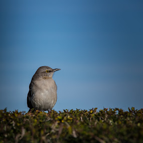 watching by Eduardo Llerandi - Animals Birds ( birds, portrait,  )