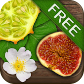 Exotic Fruits FREE
