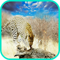 Leopard Wallpaper icon