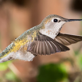 Wing Details by Jim Malone - Animals Birds