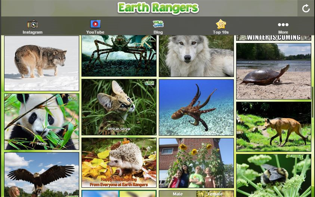 Earth Rangers- screenshot
