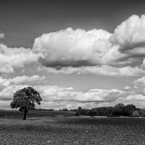 Stationfields Tamworth by Ashley Whitehouse - Landscapes Prairies, Meadows & Fields ( black and white, landscape )