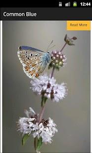 Butterflies of Palencia- screenshot thumbnail