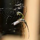 back yard spider