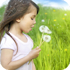 Dandelion Girl Live Wallpaper icon