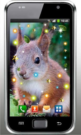 Squirrels Gallery Photo HD LWP