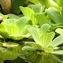 Aquatic plants icon