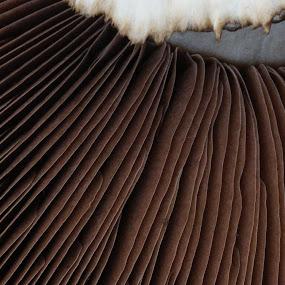 Mushroom by VAM Photography - Nature Up Close Mushrooms & Fungi ( mushroom, macro, market, nature, nyc, places, , vertical lines, pwc )