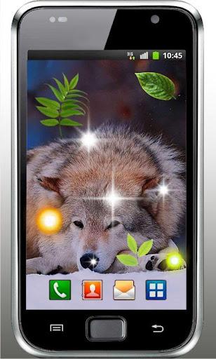 Wolf Love HD live wallpaper